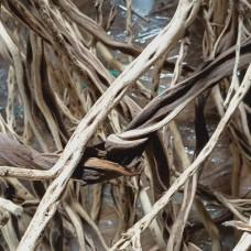 Ribbed Wood XL