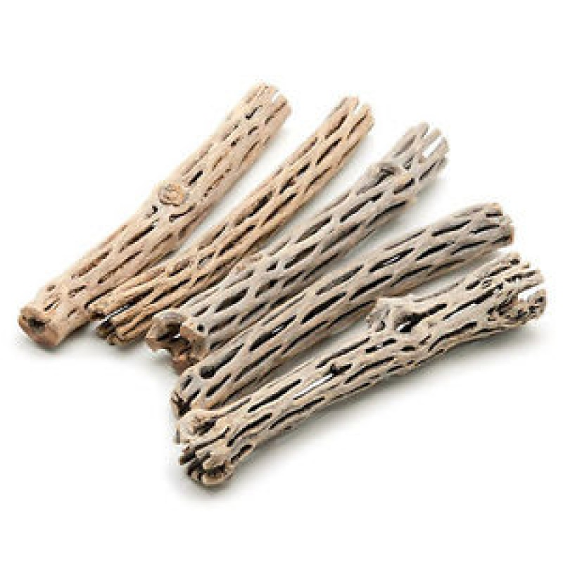 Cholla Wood -M-