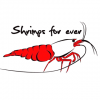 Shrimps Forever