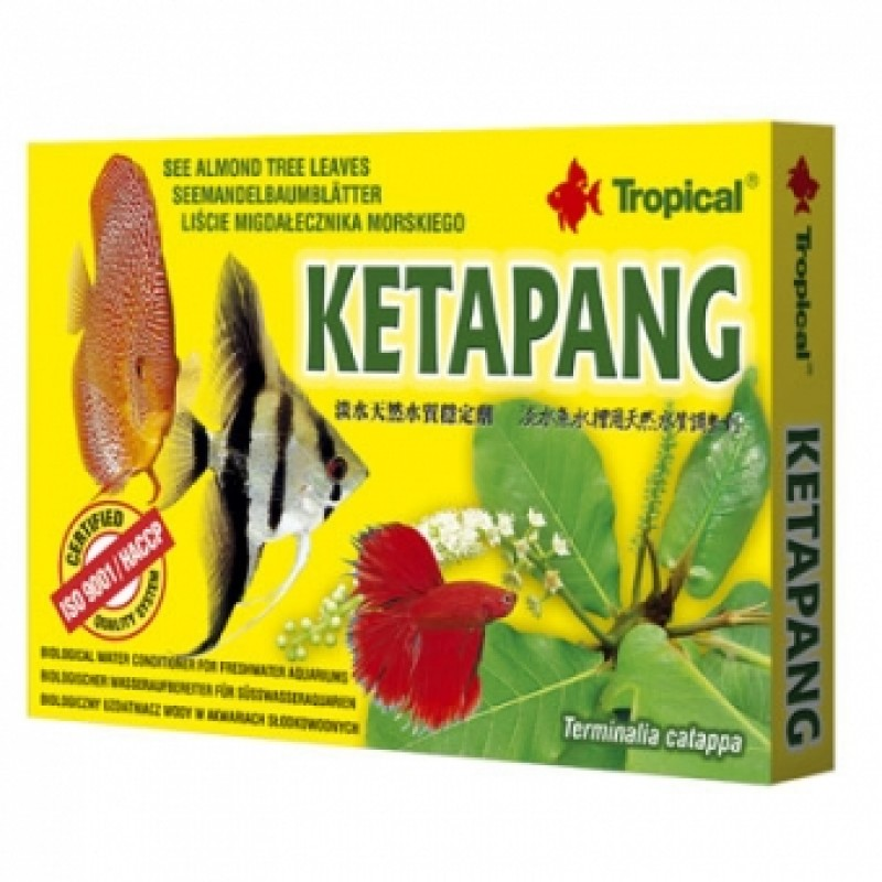 Tropical Ketapang (catappa bag) 6x