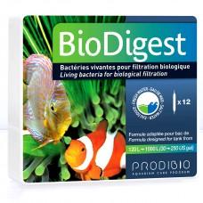 Bio-Digest Bakteri Kültürü 12 ampül