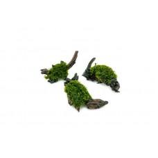 Mini Pellia on Wood 15-20cm