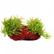 Tasarım Bitkiler (4)
