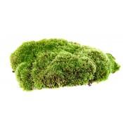 Moss Ve Su Üstü Bitkileri (37)