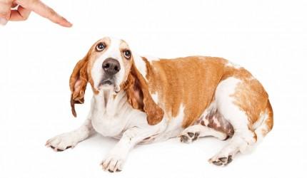 Tamamen Yanlış Anlıyor Olabileceğiniz 25 Evcil Hayvan Davranışı